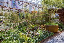 Dark Matter Garden @ RHS CHelsea